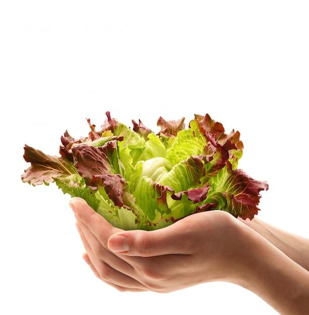 Salada fresca nas mãos Foto Premium