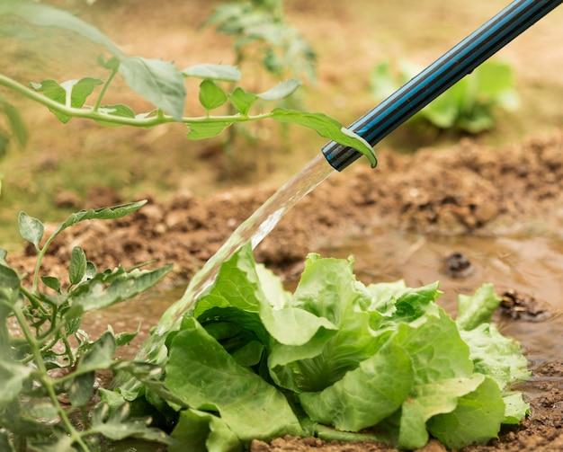 Salada verde de rega de mangueira Foto gratuita