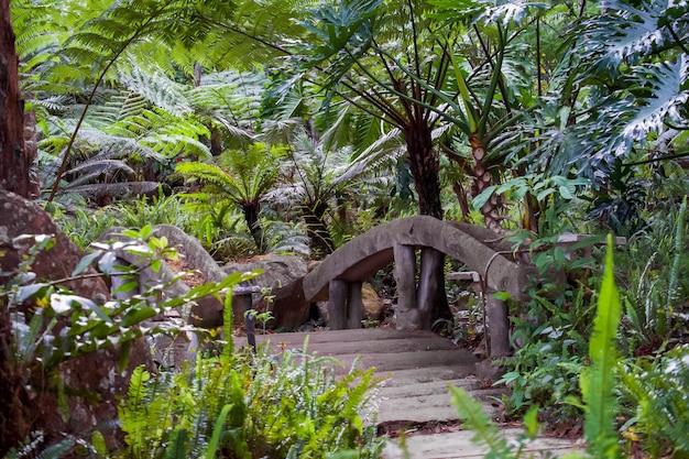 Samambaia de árvore grande na floresta tropical na cachoeira de siriphum com passagem de pedra da ponte e da pedra no parque nacional de doi inthanon, chiang mai, tailândia. Foto Premium