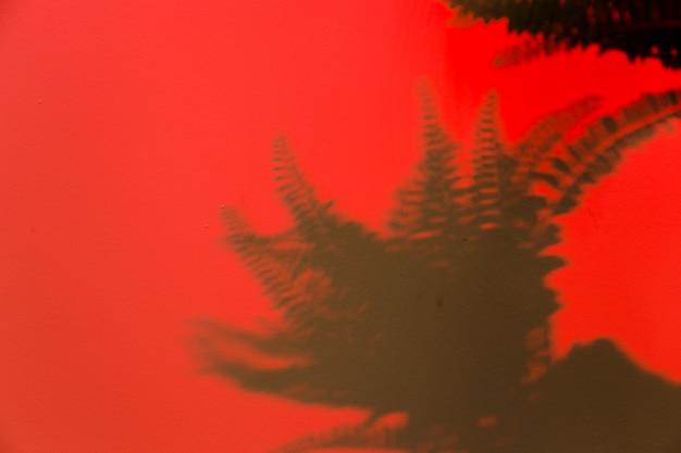 Samambaia deixa a sombra no fundo vermelho Foto gratuita