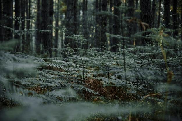 Samambaia verde exuberante, crescendo na floresta Foto gratuita