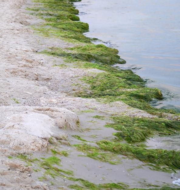 Sandy beach com algas verdes após uma tempestade, Foto Premium