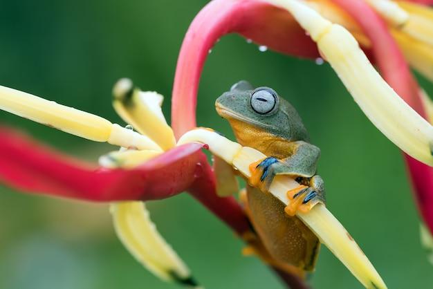 Sapo verde empoleirado nas pétalas de uma flor Foto Premium