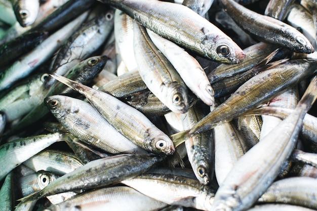 Sardinhas na antena do mercado de peixe Foto gratuita