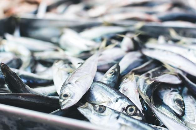 Sardinhas no mercado de peixe Foto gratuita