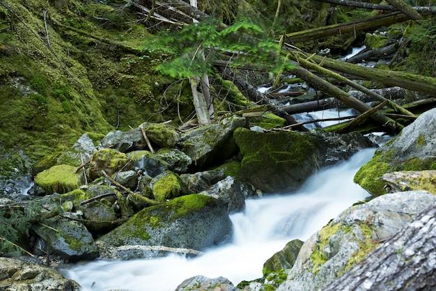Scenic montana mossy creek Foto gratuita