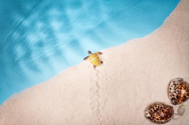 Seascape conchas areia, cartão postal de férias. animais marinhos. Foto Premium