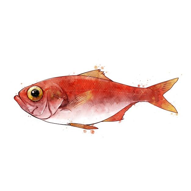 Sebastes, aquarela ilustração isolada de um peixe. Foto Premium