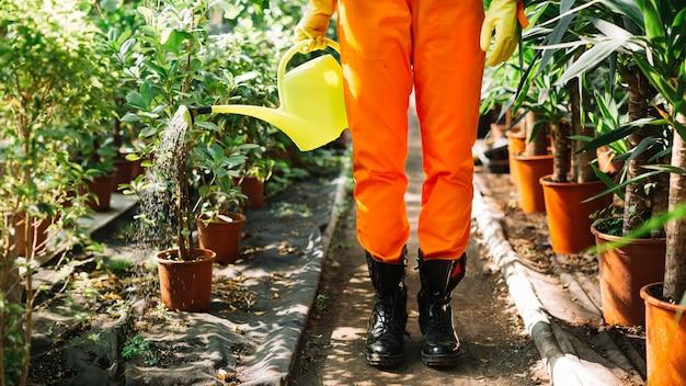Seção baixa, vista, de, um, jardineiro, aguando, potted, plantas Foto gratuita