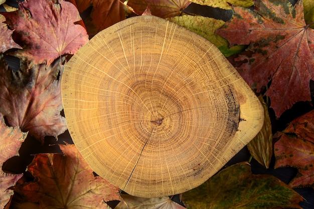 Seção transversal de madeira e folhas de maple outono colorido Foto Premium