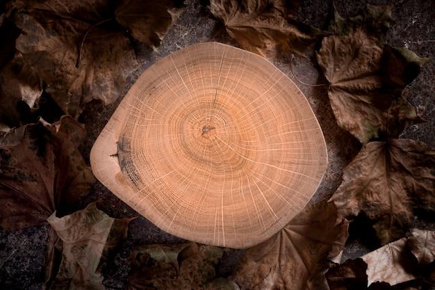 Seção transversal do coto de madeira com anéis de árvore com as folhas de bordo secadas. Foto Premium