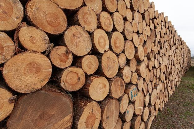 Seleção de tocos de madeira no campo Foto gratuita