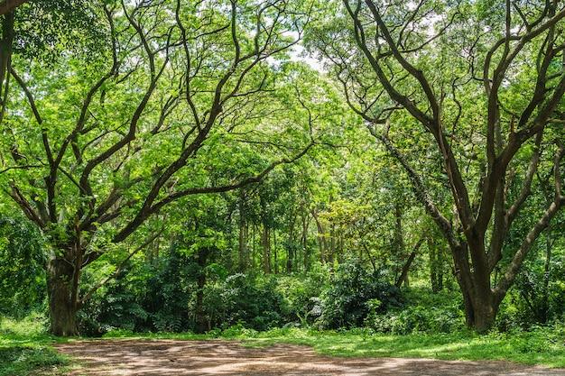 Selva de floresta tropical panorâmica na tailândia Foto Premium