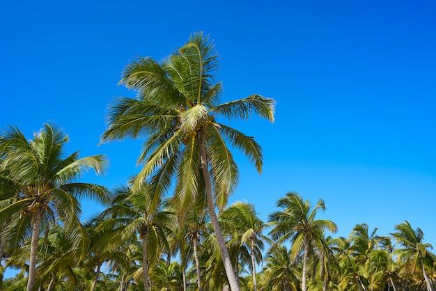 Selva de palmeiras de tulum na praia riviera maia Foto Premium