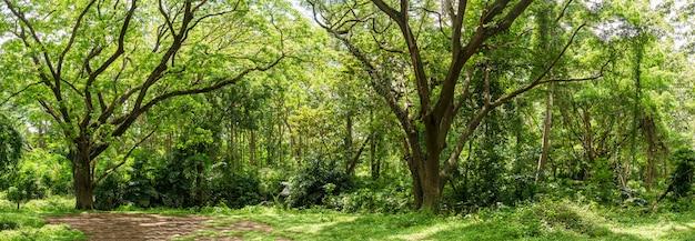 Selva tropical panorâmica da floresta tropical na tailândia Foto Premium