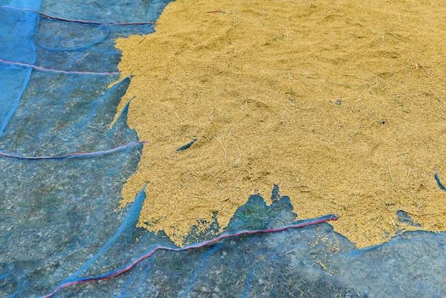 Semente de arroz seco em casca crua - conceito de arroz de moagem Foto Premium