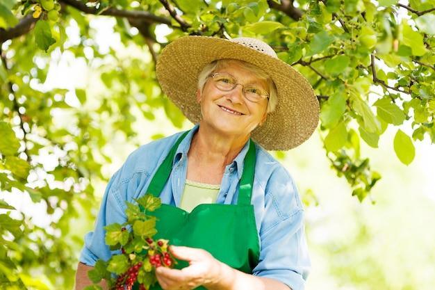 Sênior verificando um arbusto de groselha Foto gratuita
