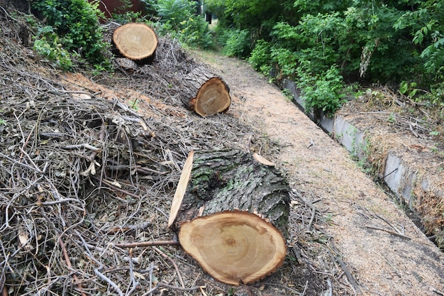 Serração de toras de troncos Foto Premium