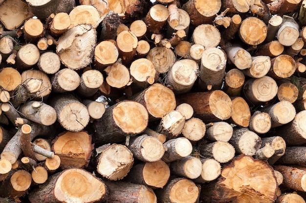 Serrado e empilhado sobre um monte de troncos de pinheiro durante a sua colheita. fechar-se. Foto Premium