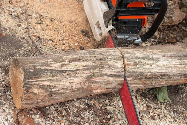 Serrar uma árvore com uma motosserra. Foto Premium