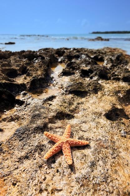 Shell sea star na costa caribenha Foto gratuita
