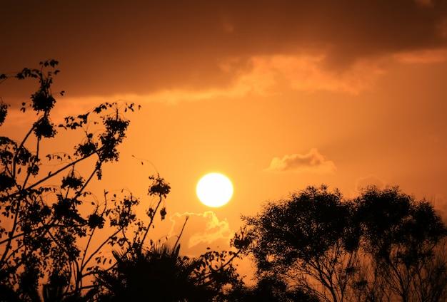 Silhueta da folhagem contra deslumbrante sol poente no céu nublado ouro laranja Foto Premium