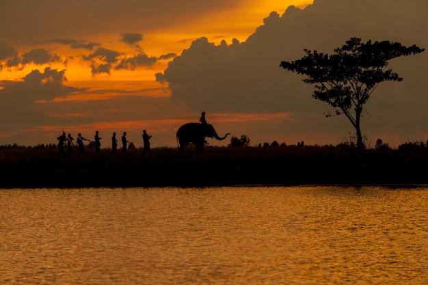 Silhueta da parada e cultura do elefante Foto Premium