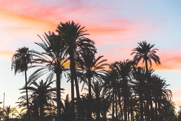 Silhueta de árvores de palma ao pôr do sol em maiorca Foto Premium