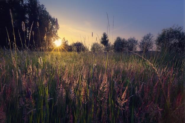 Silhueta de árvores em um campo gramado com um sol brilhante ao fundo Foto gratuita