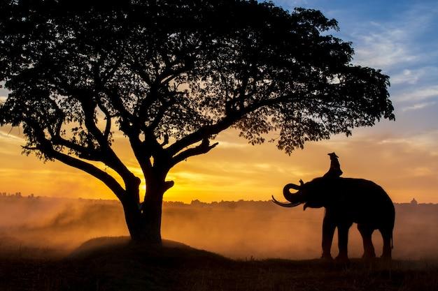 Silhueta de elefantes na tailândia durante a hora do nascer do sol Foto Premium