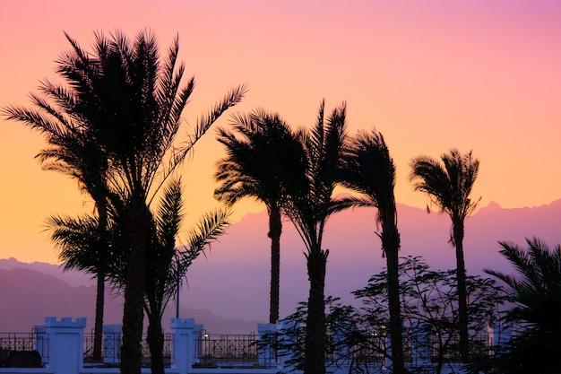 Silhueta de palmeiras Foto Premium