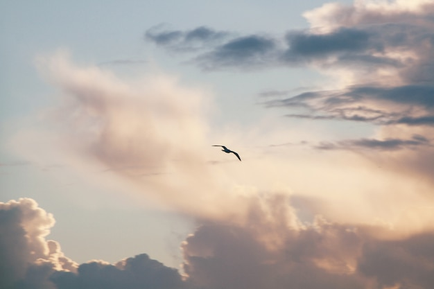 Silhueta de um pássaro voador com um céu nublado Foto gratuita