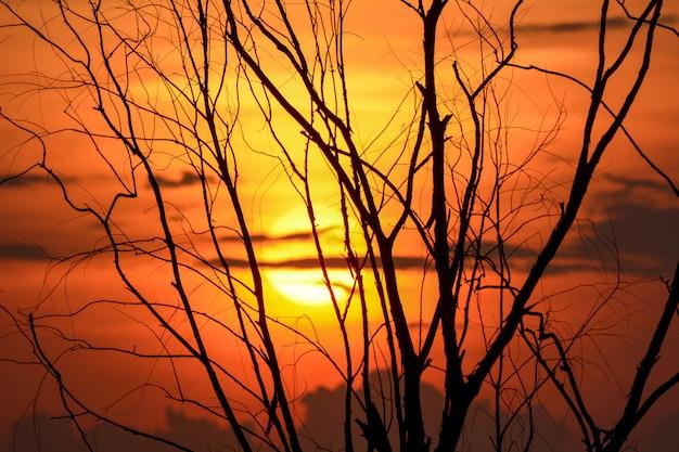 Silhueta do ramo de árvore com por do sol, fundo de dia das bruxas. Foto Premium