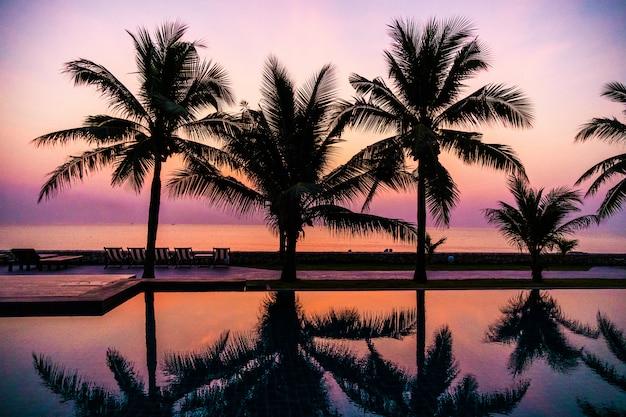 Silueta, coqueiro, ao redor, ao ar livre, piscina Foto gratuita