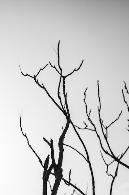 Silueta, de, árvore nua, contra, céu Foto gratuita