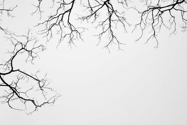 Silueta, de, um, leafless, árvore, isolado, branco Foto Premium