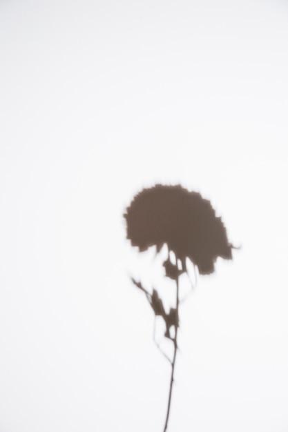 Silueta, de, único, flor, branco, fundo Foto gratuita