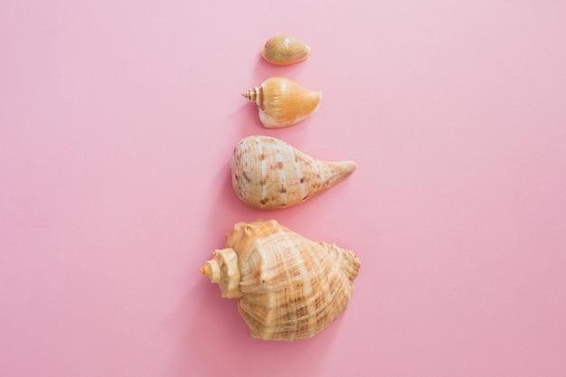 Símbolo das conchas do mar de férias de verão na praia em um fundo cor-de-rosa. Foto Premium
