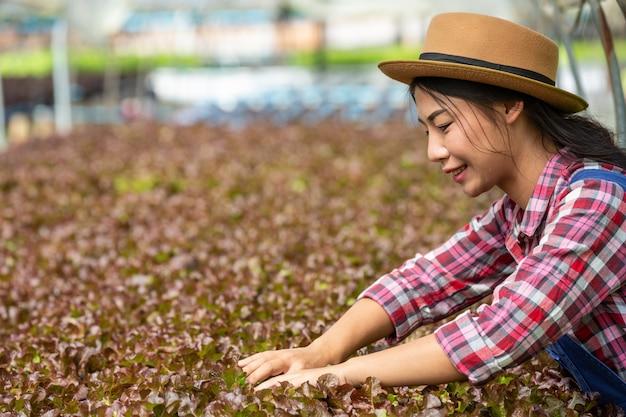 Sistema de hidroponia, plantio de vegetais e ervas sem usar o solo para a saúde Foto gratuita