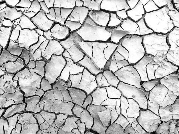 Solo seco em fundo preto e branco Foto Premium