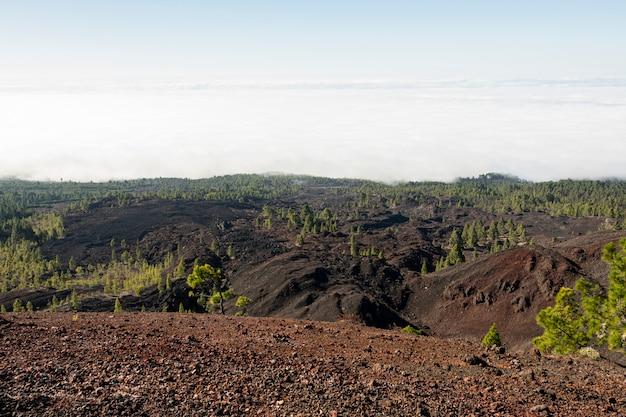 Solo vulcânico com floresta evergree Foto gratuita