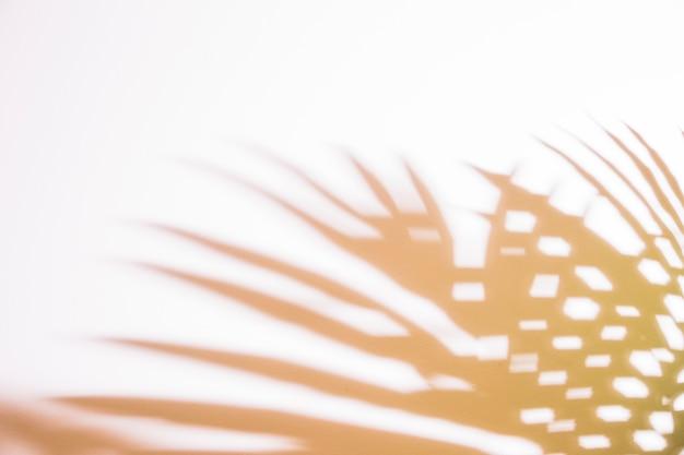Sombra de folhas de palmeira no pano de fundo branco Foto gratuita