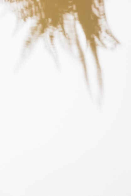 Sombra de folhas no fundo branco Foto gratuita