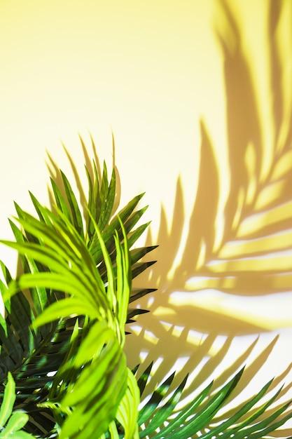 Sombra de folhas verdes em fundo na luz solar Foto gratuita