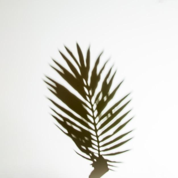 Sombra de mãos segurando uma folha de palmeira em pano de fundo branco Foto gratuita