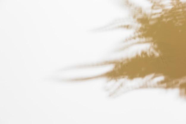 Sombra de samambaia turva deixa no pano de fundo branco Foto gratuita