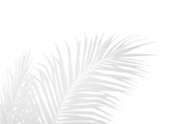 Sombra em folha de palmeira branca do preto abstrato da sombra em um fundo branco da parede. Foto Premium