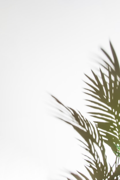 Sombras de folhas de palmeira isoladas no pano de fundo branco Foto gratuita