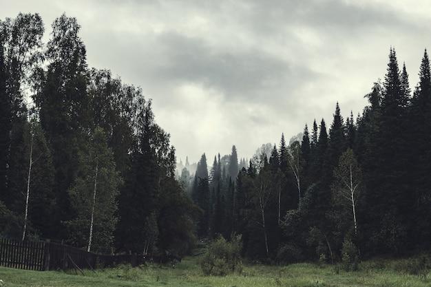Sombria atmosfera de noite na floresta escura. altos abetos e pinheiros no nevoeiro. tempo nublado e neblina assustadora em taiga. névoa entre as camadas das árvores. paisagem misteriosa no estilo horror em tons desbotados. Foto Premium