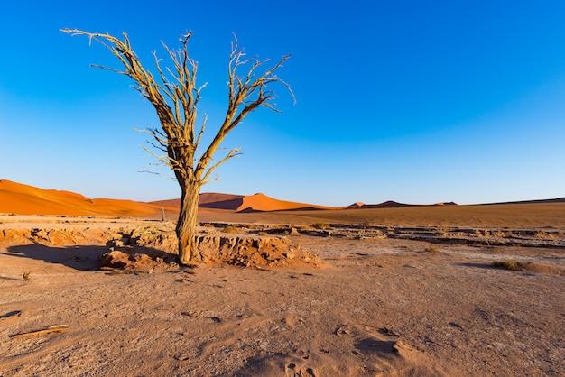 Sossusvlei namíbia, sal de argila cênica plana com acácias trançadas e majestosas dunas de areia. Foto Premium